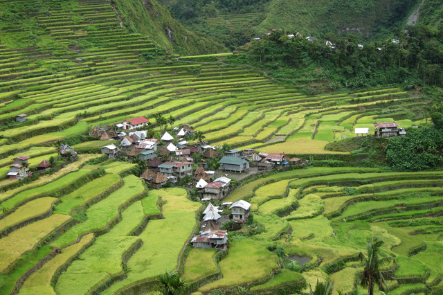 Rice terrace fields Luzon Philippines Flickr Jayreel Bacurayo