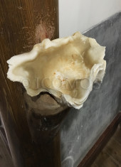 egami-church-clam-shell-used-as-holy-water-receptacle