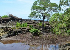 19-seawall-and-mangrovescopy